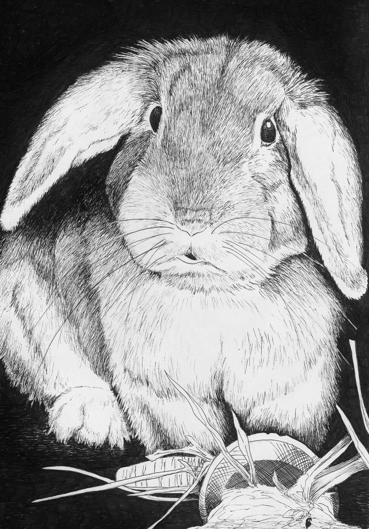 E.B. Rabbit by artsy-owl