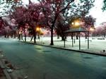 dawn street