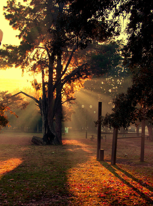 sun morning by demor