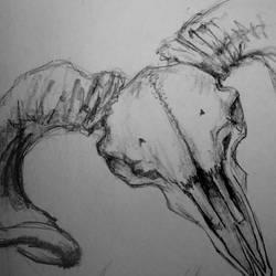 skull sketch 3