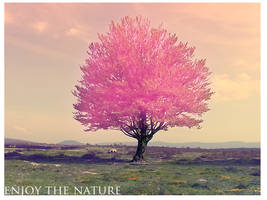 enjoy the nature by crazykira