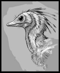Archaeopteryx head study