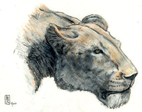 Lionness 2 by dustdevil
