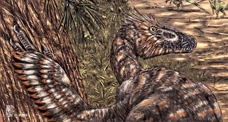 Variraptor mechinorum-detail by dustdevil
