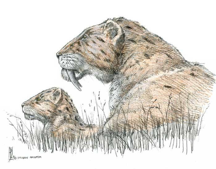 Smilodon populator by dustdevil