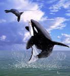 Orca vs sea lion