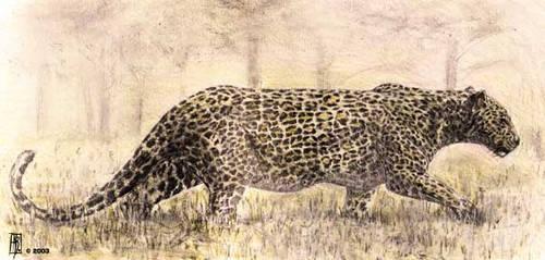 Panthera by dustdevil