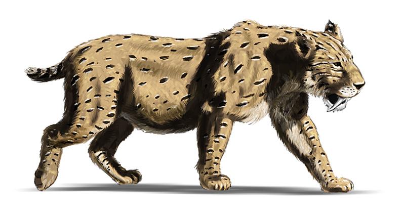 Smilodon Face By Pyroraptor42 On Deviantart: Smilodon By Dustdevil On DeviantArt