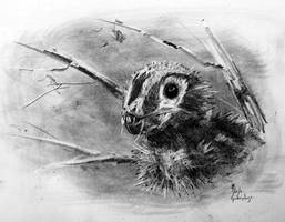 Epidexipteryx by dustdevil