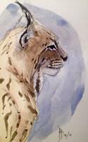 Lynx by dustdevil