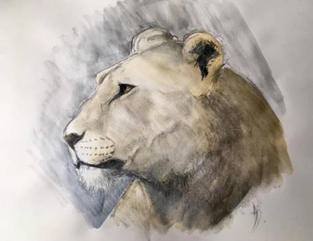 Lioness Sketch