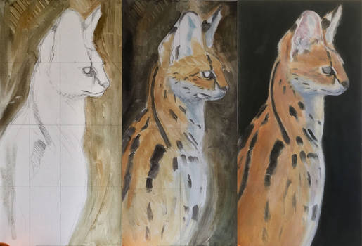 Serval portrait in progress