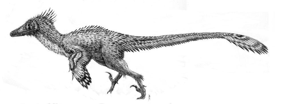Velociraptor mongoliensis by dustdevil