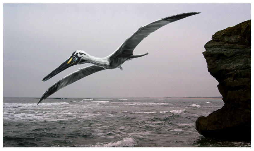 Pterodactylus kochi by dustdevil