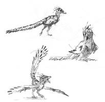 Archaeopteryx studies by dustdevil