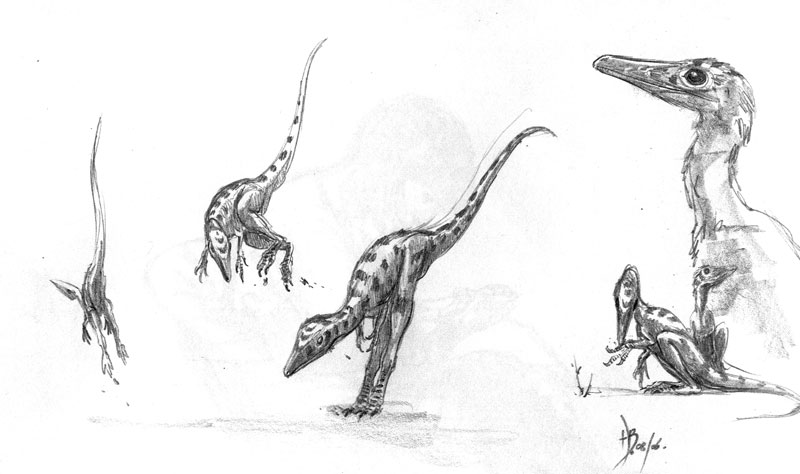 Juravenator by dustdevil