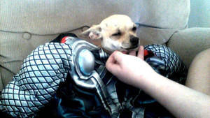My dog is Thor.
