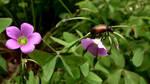 Little Brown Bug on clover by BGai