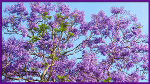 Lots of purple! by BGai