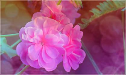 For Ann by BGai