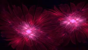 Starlight Flowers