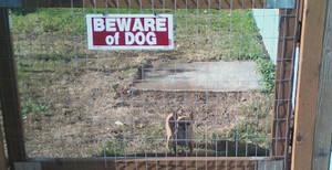 Beware the Chihuahua by OmuYasha