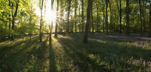 Plymbridge Spring