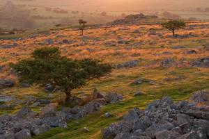 King's Kalahari