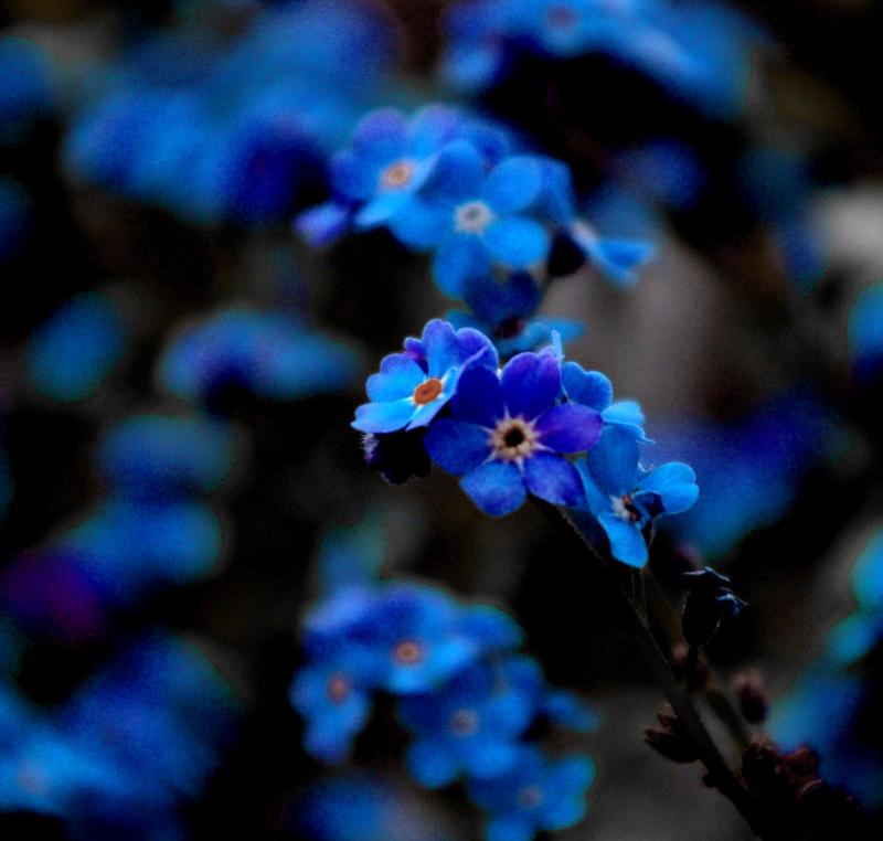bursting blue by blu-ish