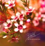 floral seizure