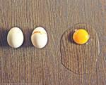 Eggolution