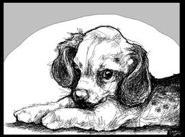 paint puppy