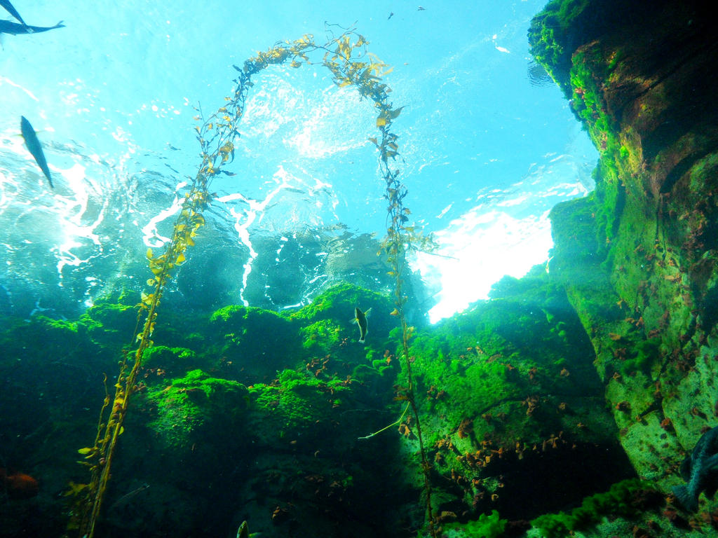 Kelp Forest n1 by InkTheEchidna