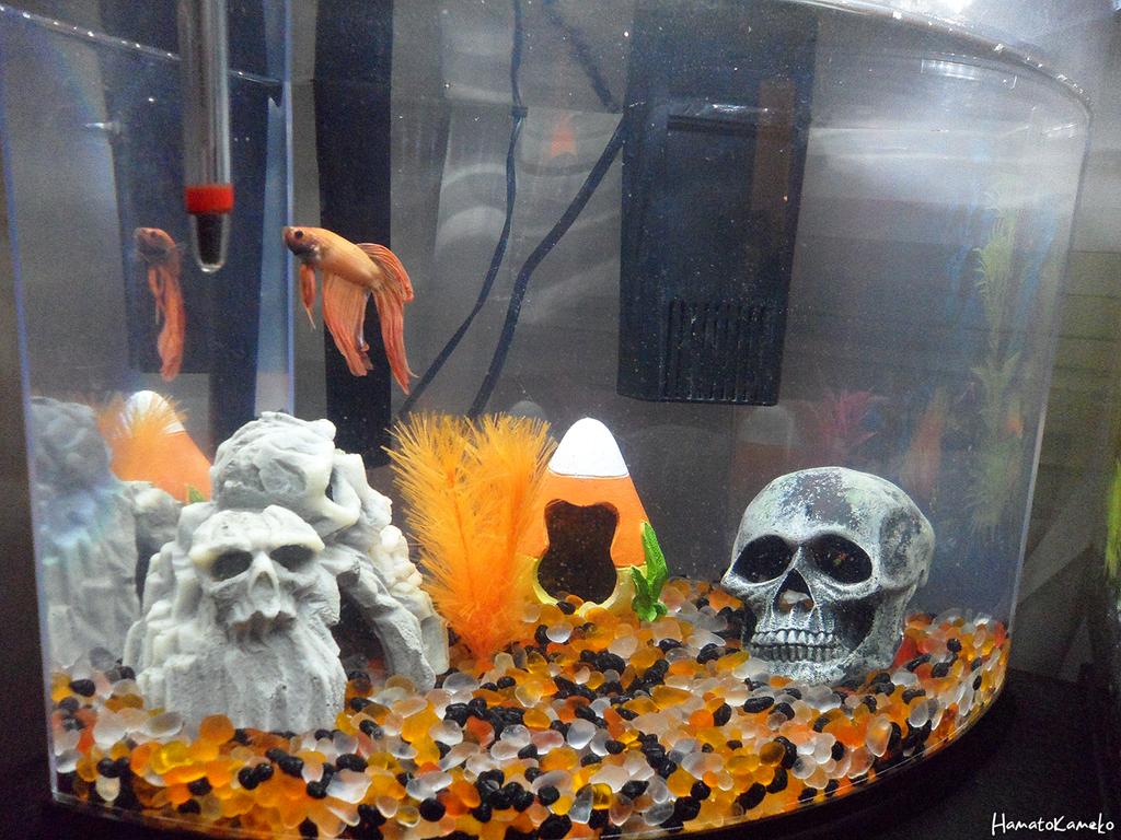 halloween aquarium update n1 by