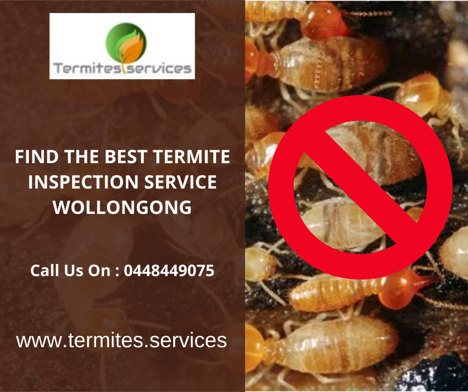Find The Best Termite Inspection Service Wollongon By Termitesservices On Deviantart