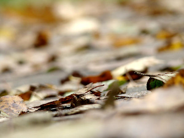 carpet by narare
