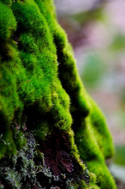 Tree Moss by WriteTimeWrongPlace