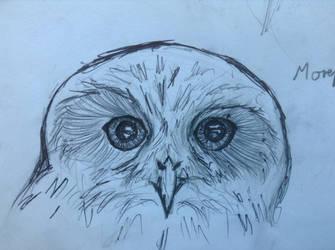 Morepork Owl by animalsketchsisfun