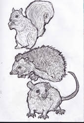 Woodland Creatures by animalsketchsisfun