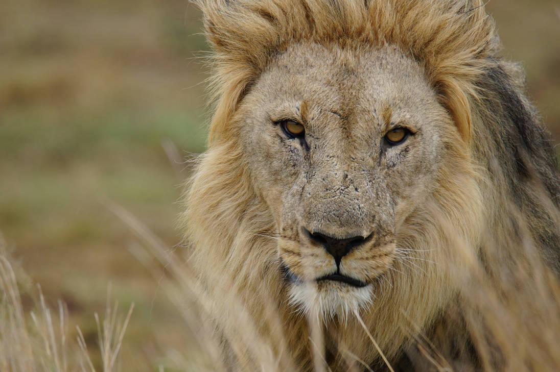 Closeup King - SA by AshleyWass