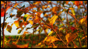 Autumn Colours by maaanuel