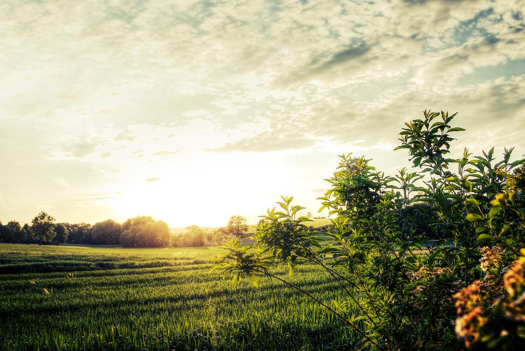 Rural Sunset by maaanuel