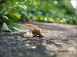 Where's the acorn..? by Wish-UponAStar