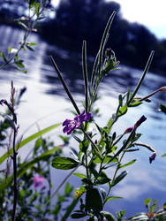 Flower at the lake by Wish-UponAStar