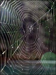 An empty cobweb by Wish-UponAStar