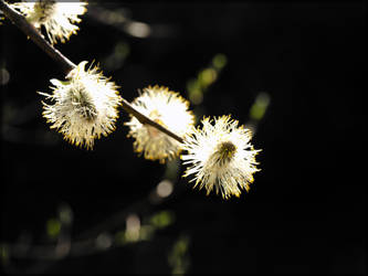 Light by Wish-UponAStar