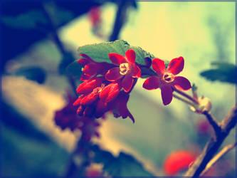 Spring feelings by Wish-UponAStar