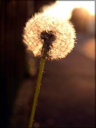 Blowball Magic by Wish-UponAStar