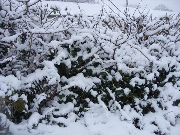 snow03 by fierysoul
