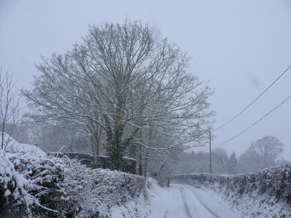 snow04 by fierysoul